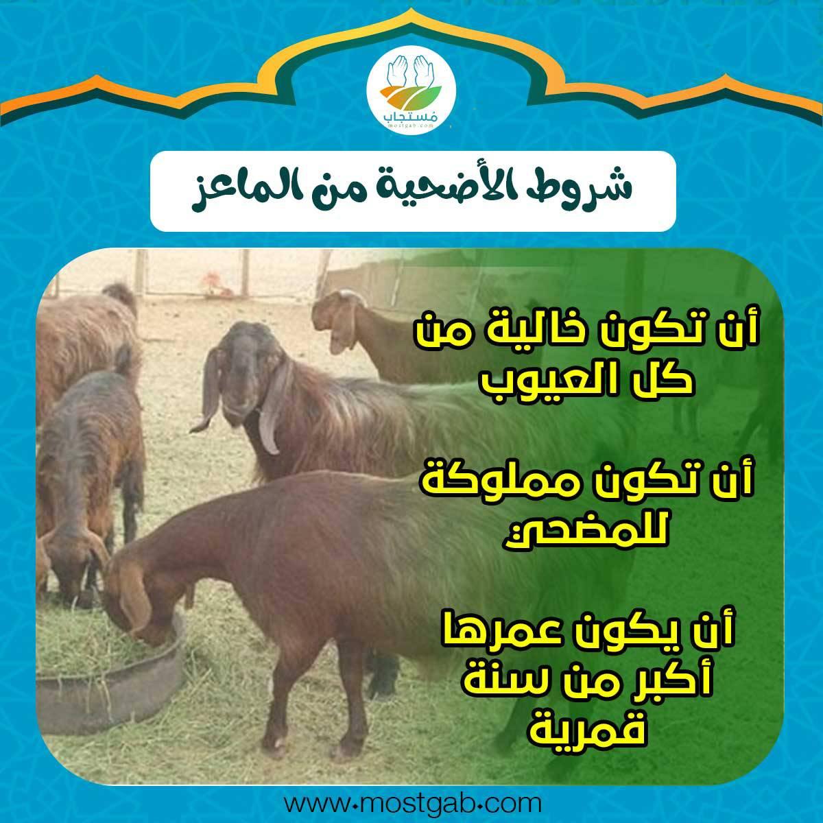 شروط أضحية الماعز في العيد